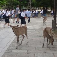 最終日は、奈良東大寺。