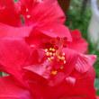 夏に向かって赤花