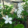 「草津市立水生植物園みずの森」は水生植物や夏の花が充実