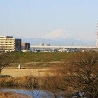 江戸川サイクリング ㉑ 菅生沼