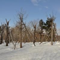 富沢クロスカントリーコースへ(3/4)~雪害のチセ、発見!