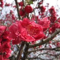 ヤマモモの花