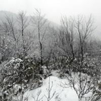 粉雪降る白兀山