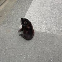 出張先で見つけたネコ I saw a cat when I went to Adachi for meeting