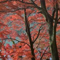 里山の紅葉狩り(6)