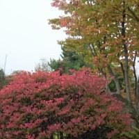里も紅葉が始まりました