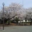お花見・・目黒川に行って来た。