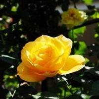 バラ屋敷 2