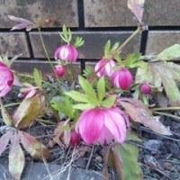 今月のお庭