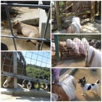 動物園に行ったでしゅ~