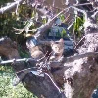 木登りノラ猫