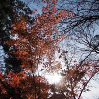 紅葉のある風景@2016/11/26 。。。
