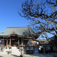 全徳寺のロウバイ