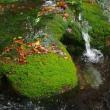 水の有る風景ー7