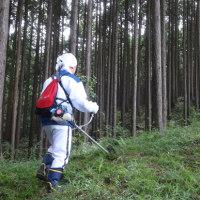 愛鷹山麓区有林下草刈り