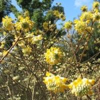 京都府立植物園の花