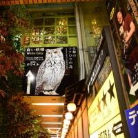 京都フクロウの森