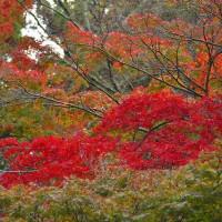 奈良公園の紅葉・・・8