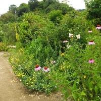 梅雨のイギリス庭園・・・*