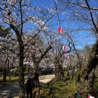 千秋公園の桜2017