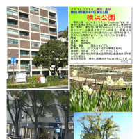 花巡り 「梅-163」 横浜公園