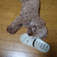 稀一くんのお宮参りは舞子六神社でした)^o^(