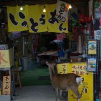 萩 津和野方面の旅ー45 「最終回」