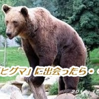 「ヒグマ」に注意を!!