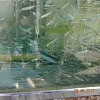 支笏湖にて チップ(?)釣り