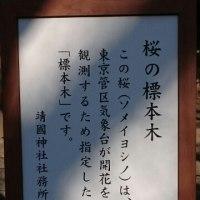 靖国神社行きました