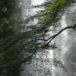 箕面の滝 (2)