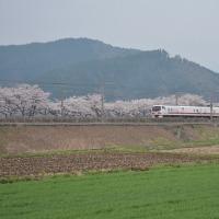 本日の撮影 桜の中を行くEast-i D