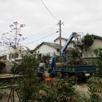 ガーデンの植木剪定