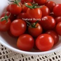 朝摘みトマト