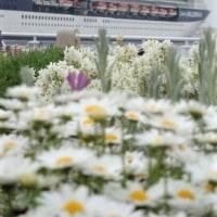 横浜港の花散歩♪、(2017春)。