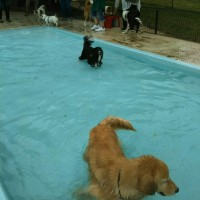 名犬牧場のプールだよ(^○^)