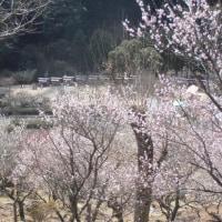 スポコミ・カワラ版 3月21日(火)先勝