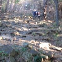 尊仏山荘の「みゃ~君」がピンチの丹沢;塔ノ岳(今年32回目)