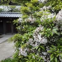 花の寺「東慶寺」