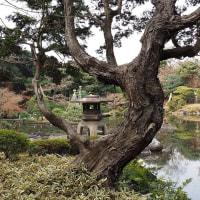 旧古川庭園へ