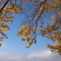 ★アルプス公園の紅葉2016(2)