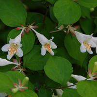 木の花にもヘンな花