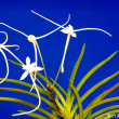 富貴蘭 今夏再登場の花