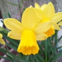 春の足音、近し。。