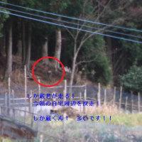 平成28年12月9日・今朝の東祖谷2.1℃