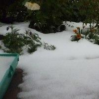 どっと来た初雪