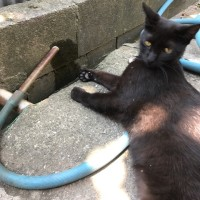 つぶやき猫 20日