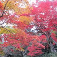 4泊5日で京都、広島出張でした(東京⇒京都⇒広島⇒東京)