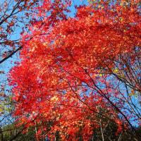 初冬の森~紅葉散策