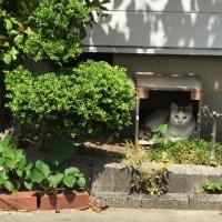 家の猫たち(2017/06/25)